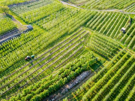 Apple orchard in spring - Aerial view Reklamní fotografie