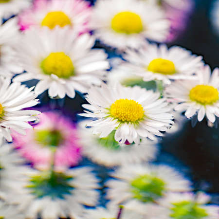 composition with delicate marguerites - close up