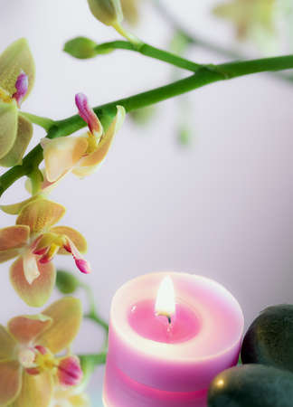 composition with candelina and orchid