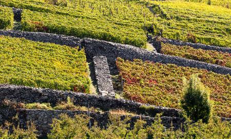 Valtellina (IT), vineyards with dry stone walls