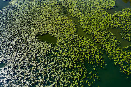 Pond with water lilies, aerial view