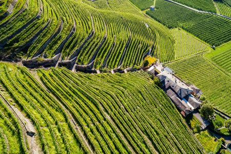 Valtellina (IT), Bianzone, Aerial view of the Nebbiolo vineyards Archivio Fotografico