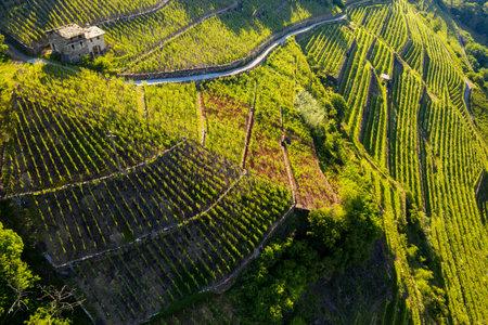 Valtellina (IT), Castionetto di Chiuro, Aerial view of the vineyards