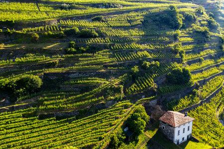 Valtellina (IT), Aerial view of vineyards Archivio Fotografico