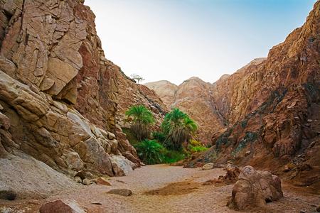 monte sinai: Oasis en las montañas