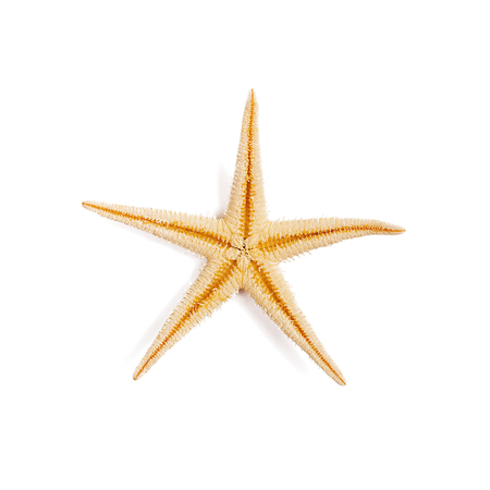 Isolated starfish on white background.Top view