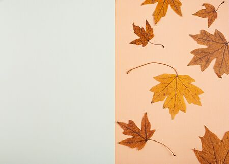 Autumn concept. Dried leaves on pastel colors. Top view
