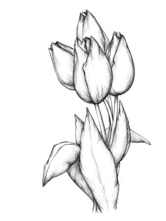 bunch: Illustration of a bunch of tulips Stock Photo