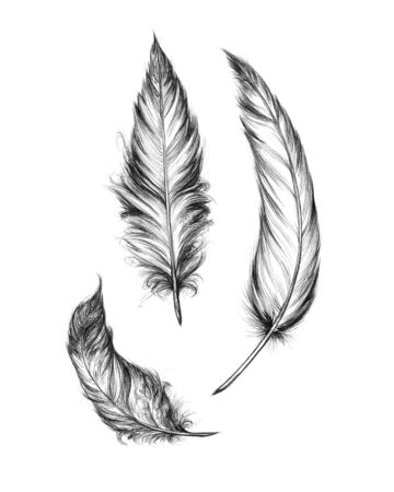 Three different feathers