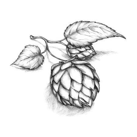 umbel: illustration of a hop umbel with leaves