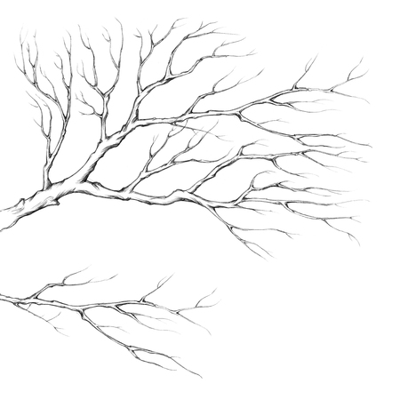 gnarled: Illustration of two branches without leaves Stock Photo