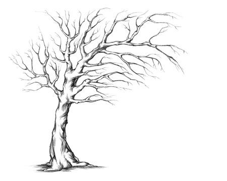 transverse: Tree in transverse format