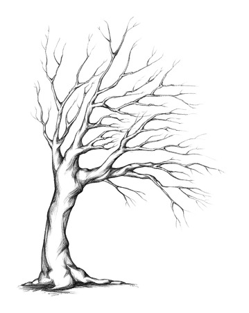 gnarled: Tree with asymmetrical crown