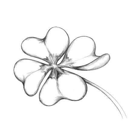 単純な 4 つ葉のクローバーのイラスト 写真素材