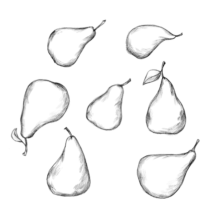 Illustration of some pears