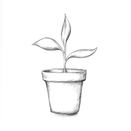 Illustration of a young plant in the pot