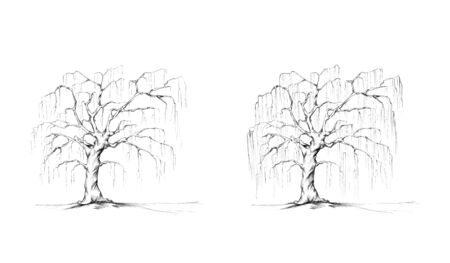 Illustration of two weeping willows Фото со стока