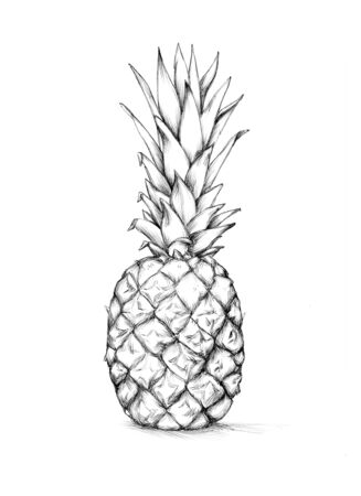Illustration of  a whole pineapple Фото со стока