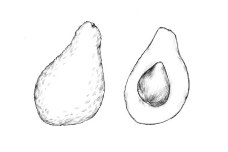 Illustration of Two avocado fruits
