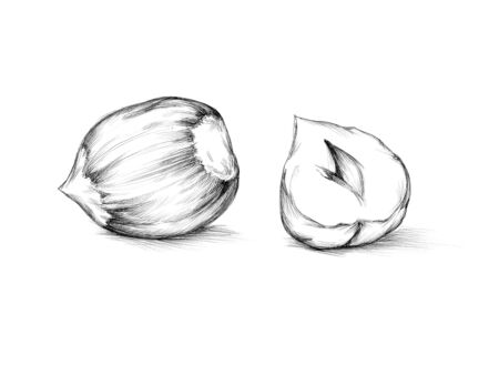 Illustration of a half and a whole hazelnut