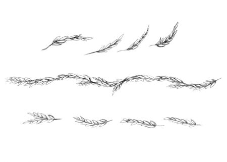 Illustration of some Boxwood branches