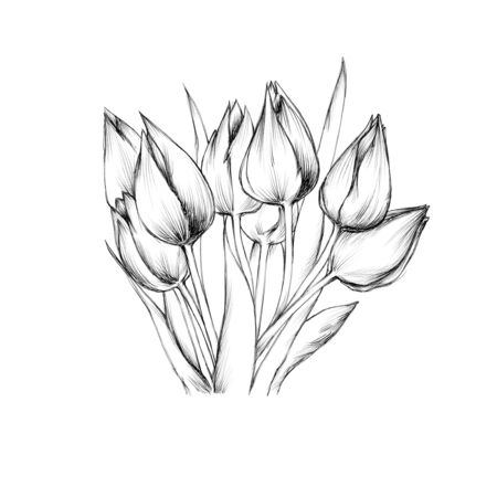 Illustration of a Bouquet with tulips