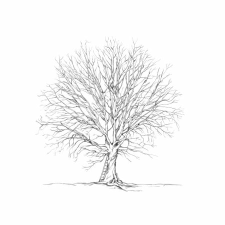 Illustration of an Oak tree with ladder