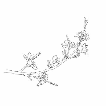 Illustration of a cherry blossom branch