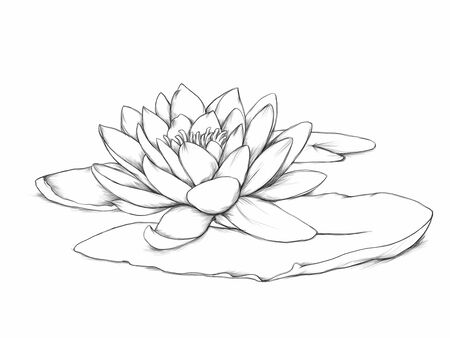 Illustration of a Water lily with leaf