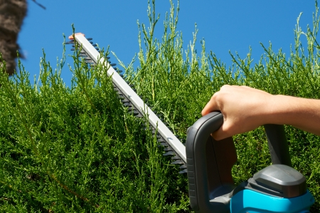 garden staff: Cutting a hedge Stock Photo