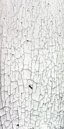 pealing: Old cracky white paint texture on wood