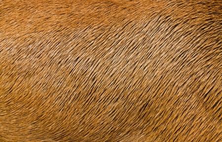 texture capelli: Animal Struttura dei capelli Archivio Fotografico