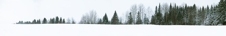 straight tree line photo