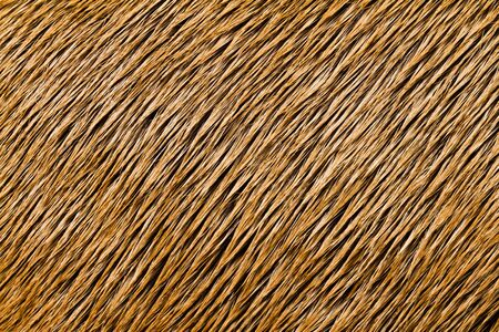 Animal Close-up Texture