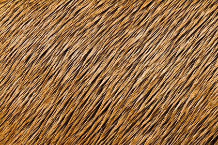 textura pelo: Animal textura Close-up