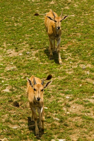 roe: Roe deer in the wild Stock Photo