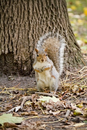 сooking: Squirrel in the forest ooking at the camera Stock Photo