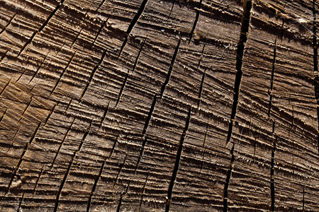sawed: Macro sawed and dry wood texture with lots of details Stock Photo
