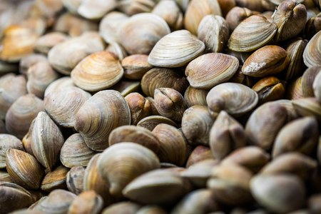 Clams in the Fish Counter of a Portuguese Restaurant