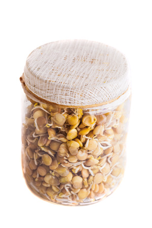 Top View of Sprouting Lentils Growing in a Glass Jar Isolated on White Background photo