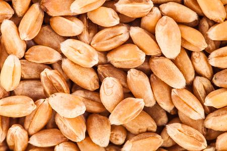 Extreme Macro Closeup Texture of wheat seeds