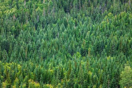 Bos textuur Ergens in Quebec, Canada