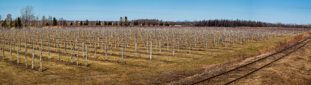 canada agriculture: This is the look of a Winery in Canada, Quebec on the Spring Season Stock Photo