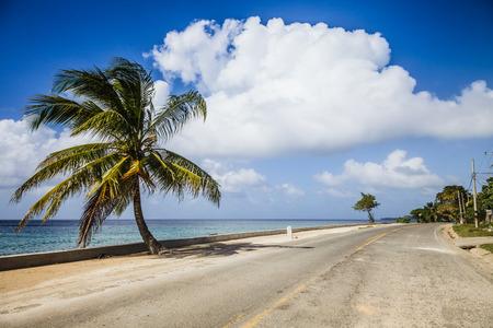 Grote Palm op de kant van de weg uitzicht op de Zee Stockfoto