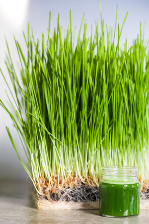 Wheatgrass details of the Roots, Seeds, Sprouts and Healthy Juice Shot ready to Drink Stock Photo