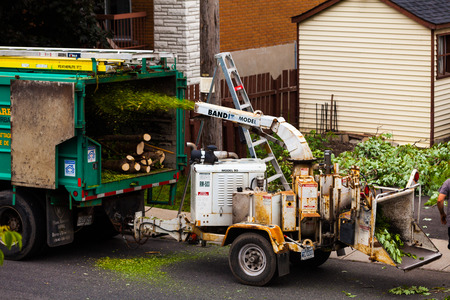 tree removal service: June 11th 2015, Montreal CANADA. Tree Shredder Machine in action and workers pushing Branches into it after cutting the Tree.
