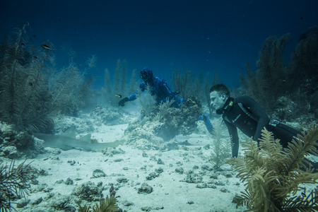 SAN ANDRES ISLAND, Colombia _ Circa March 2017. Two Freedivers Looking at a Nurse Shark Sleeping in the Corals