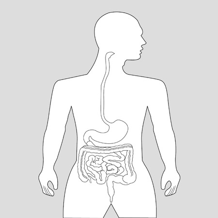 cecum: Gastrointestinal tract on gray background