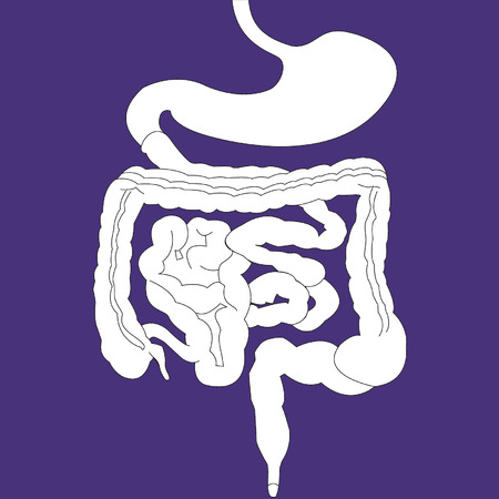 descending colon: Gastrointestinal tract on purple background Illustration