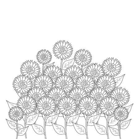 pedicle: sunflower on white background
